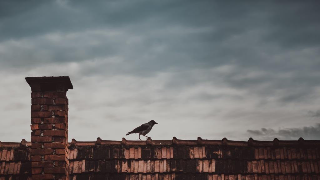 Wie ein einsamer Vogel auf dem Dach