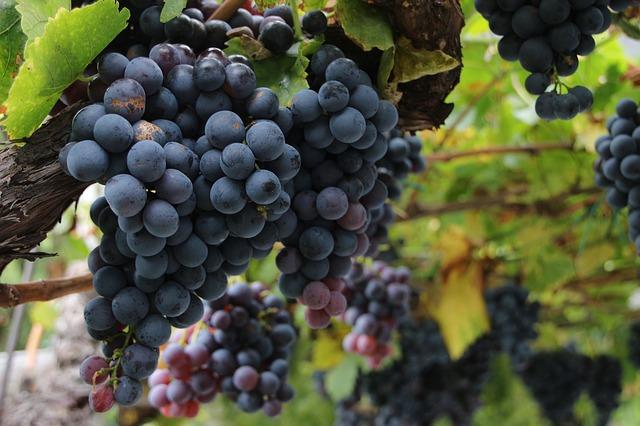 wine-3397765_640