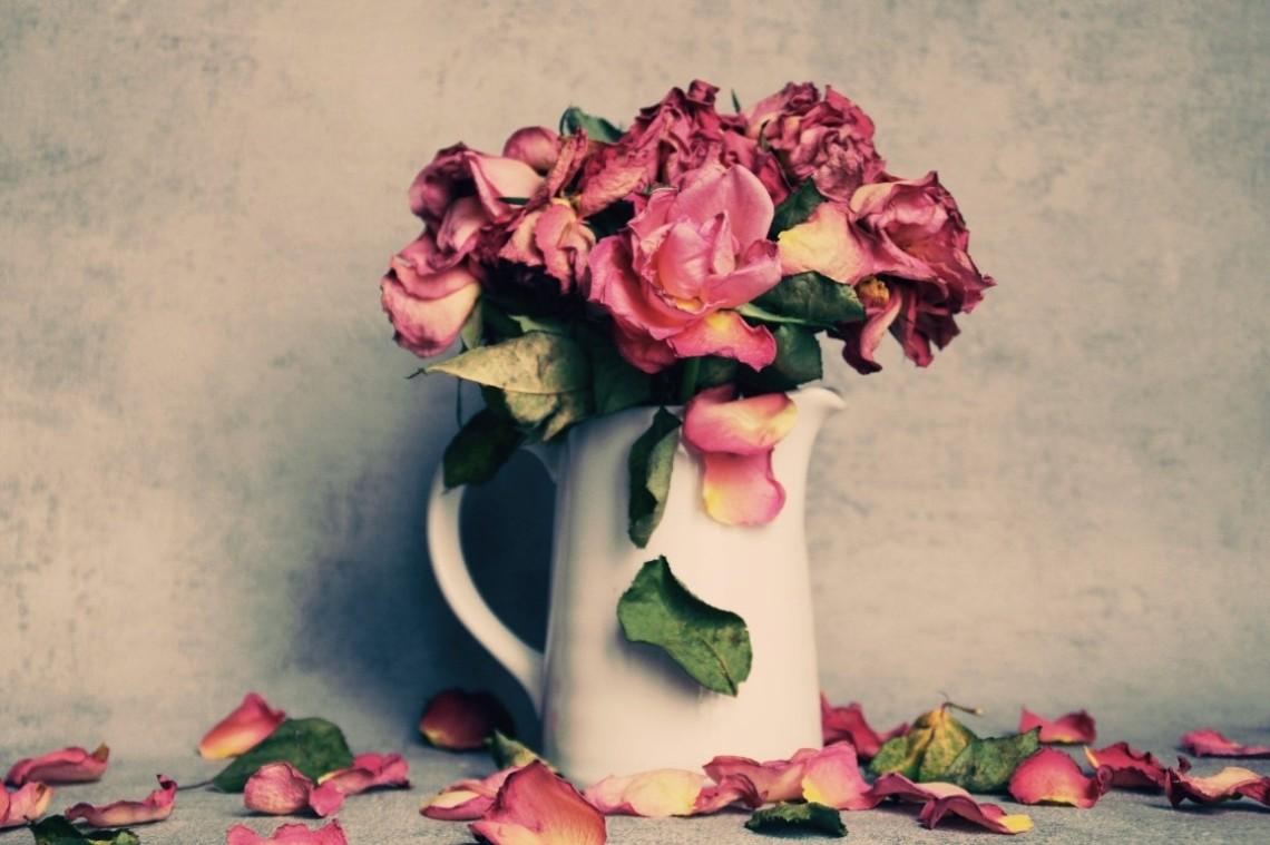 roses-4125558_1920 (Mittel)